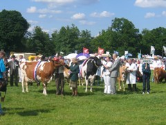 County Show cattle parade